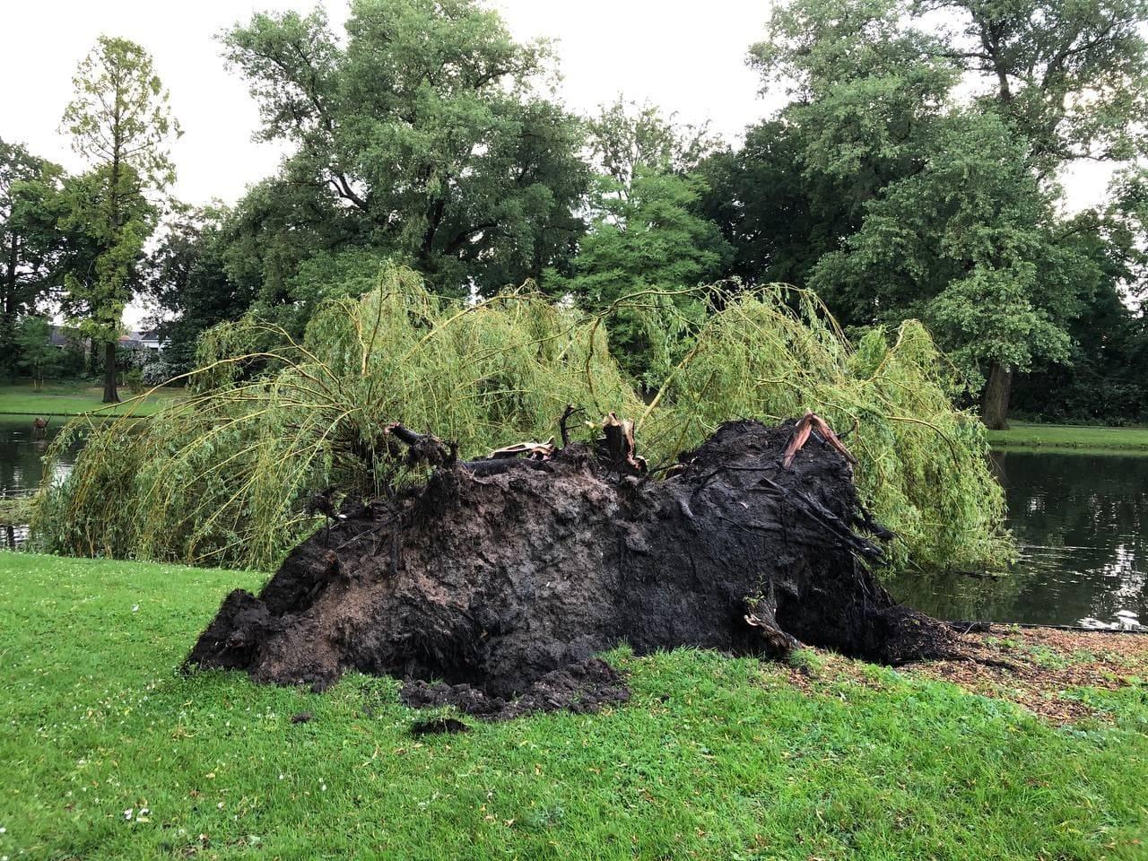 Ontwortelde bomen en flinke schade door kortstondig noodweer
