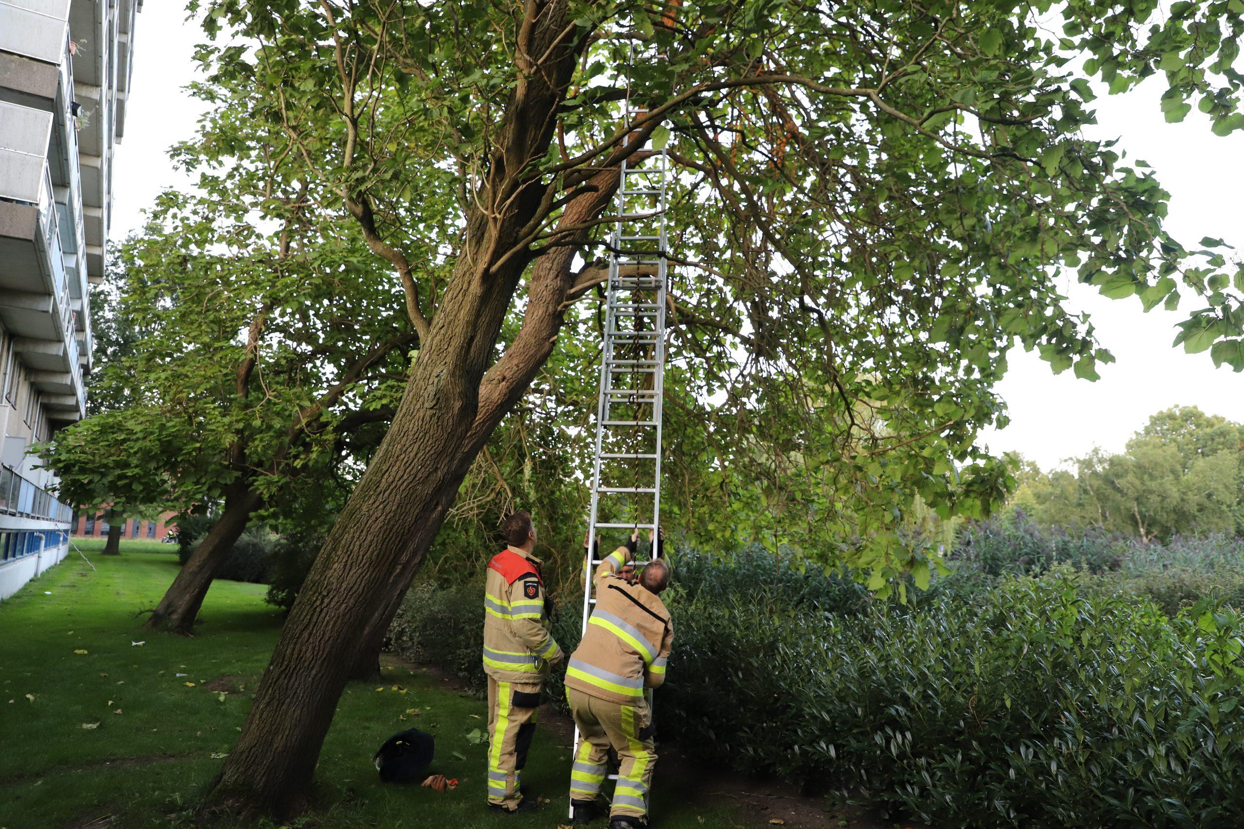 Heldhaftig optreden Kamper brandweer in gevalletje Felis catus