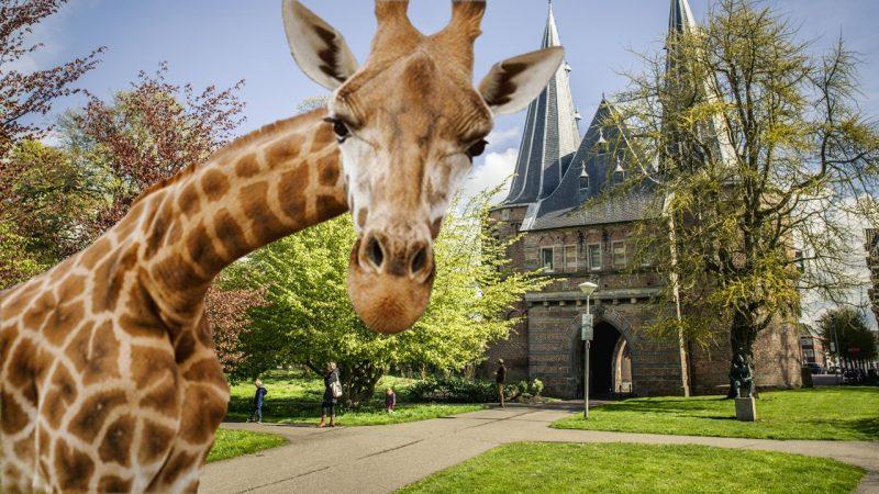 Op safari door Kampen